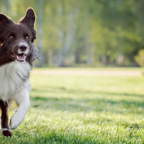 What is the right amount of exercise for your dog