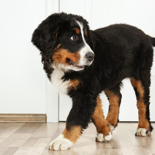 Perfect Fit tips to prepare your dog to stay alone at home