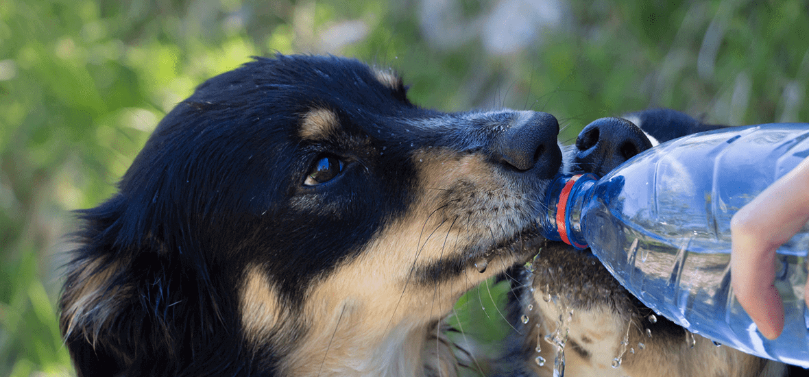 Perfect Fit tips to prevent your dog to drink form outside sources of water