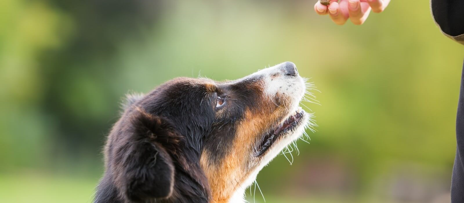 Perfect Fit tips to help your dog switch to new food